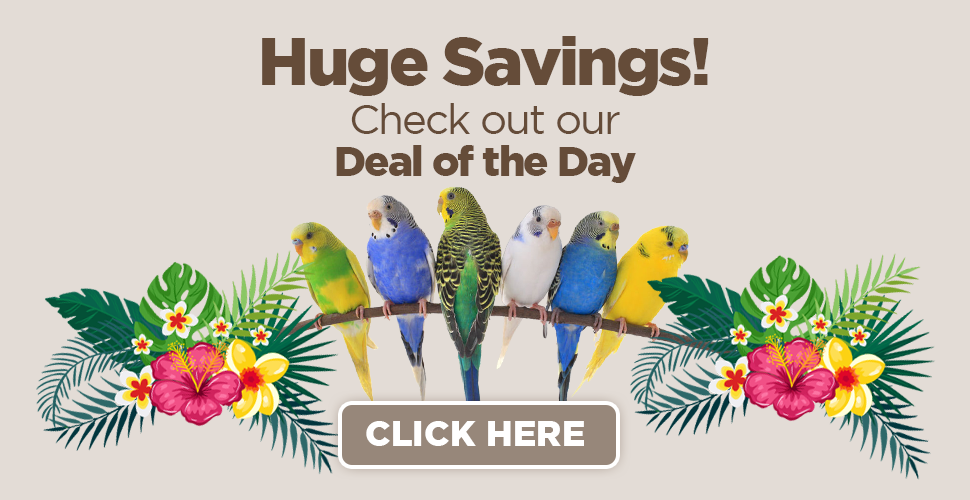 deal-of-the-day-web-banner_r1_c1.png
