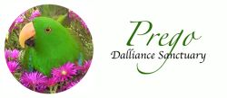 Prego Dalliance Sanctuary