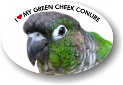 Green Cheek Conure Decal