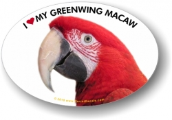 Green Wing Macaw Decal