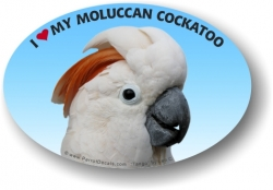 Moluccan Cockatoo Decal