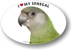 Senegal Parrot Decal