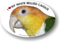 White Bellied Caique Decal
