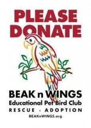 Beak & Wings Rescue