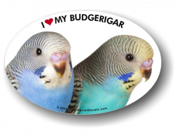 Budgerigar/Parakeet Decal