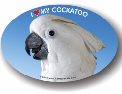 Umbrella Cockatoo Decal