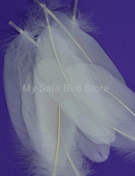 Natural Bleached White Goose Feathers 6 Pack