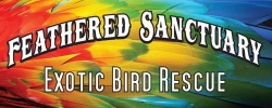Feathered Sanctuary Exotic Bird Rescue
