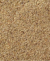 Golden Gourmet Canary Seed Bulk Per Pound