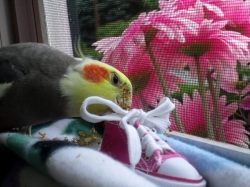 With his foraging sneaker!