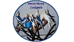 Parrot Haven Cockatiels