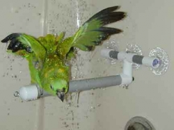 Polly's Pet Products Deluxe Shower Perch Small