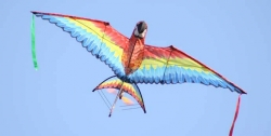 RC Wildwings Radio Controlled 3-D Macaw