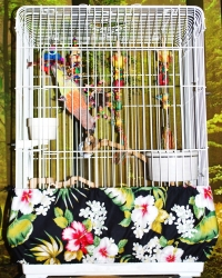 Scooter Z Bird Cage Seed Guard Small