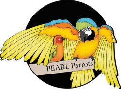 Pearl Parrot Rescue