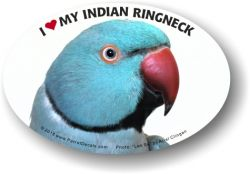 Indian Ringneck Decal