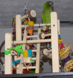 I'm King of my Cage!