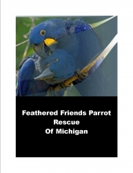 Feathered Friends Parrot Rescue of Michigan