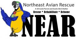 Northeast Avian Rescue