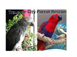 Traverse City Bird Rescue