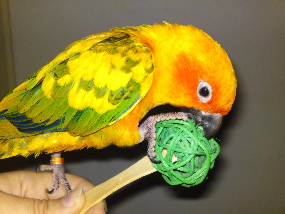 Foot Toys For Birds Conure Caique Pionus Cockatoo Macaw